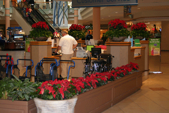 Hire Dare Living to Handle Your South Jersey Interior Landscaping Needs